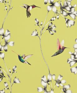 Amazilia hummingbird wallpaper - Gooseberry