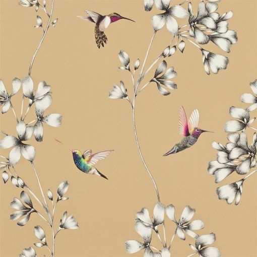 Amazilia hummingbird wallpaper - bronze