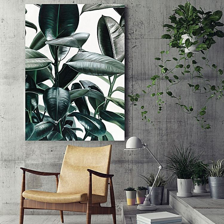 Jungle Fever - Rubber Plant Print