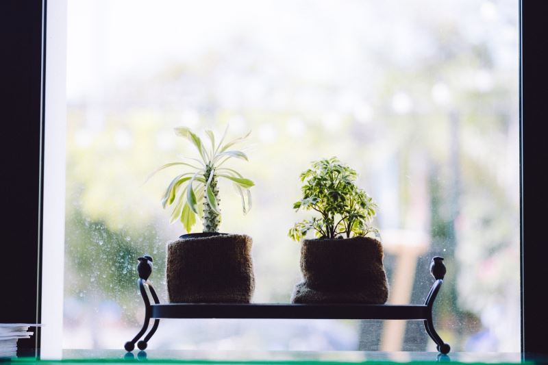 Best plants for a healthy and happy home