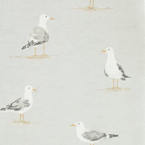 Shore Birds in Gull