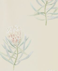 Protea Flower Wallpaper from The Art of the Garden Collection in Russet & Green