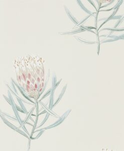 Protea Flower Wallpaper from The Art of the Garden Collection in Porcelain & Blush
