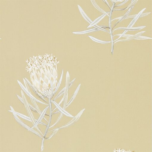 Protea Flower Wallpaper from The Art of the Garden Collection in Sepia & Champagne