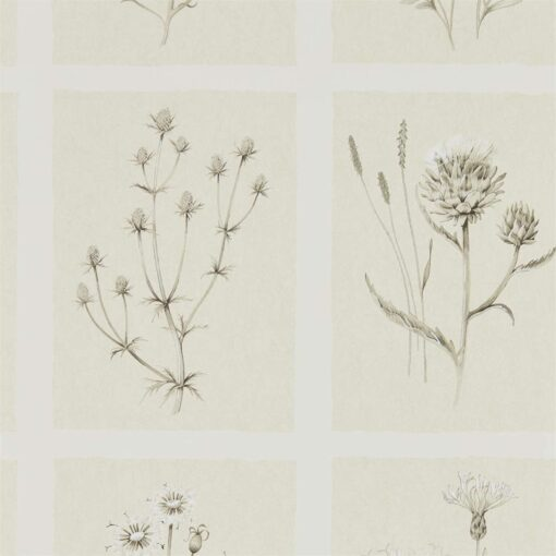 Little Thistles wallpaper by Sanderson Home in Ecru