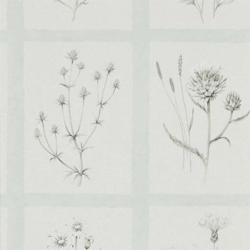 Little Thistles wallpaper by Sanderson Home in Grey Blue