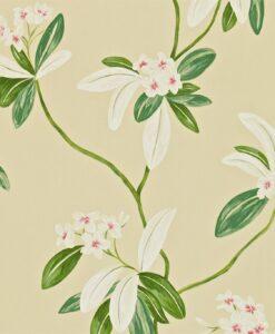 Oleander Wallpaper