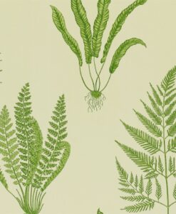 Woodland Ferns Wallpaper